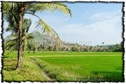 PLKD_007_www.keralapix.com_DSC0014