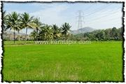 PLKD_009_www.keralapix.com_DSC0016