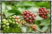 NLPY_033_www.keralapix.com_DSC0090
