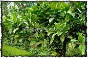 NLPY_023_www.keralapix.com_DSC0061