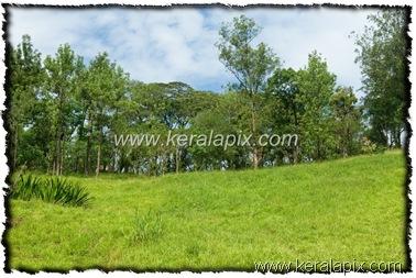 NLPY_039_www.keralapix.com_DSC0104