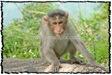 NLPY_063_www.keralapix.com_DSC0131