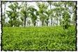 NLPY_042_www.keralapix.com_DSC0107