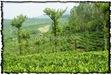 NLPY_046_www.keralapix.com_DSC0114