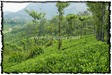 NLPY_047_www.keralapix.com_DSC0118