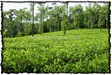 NLPY_048_www.keralapix.com_DSC0120
