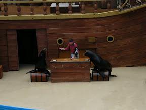 185 - Espectáculo de los leones marinos.JPG