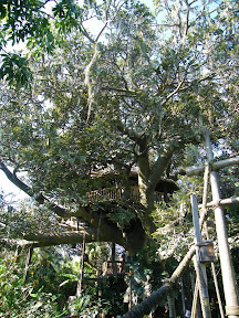 459 - Swiss Family Treehouse.JPG