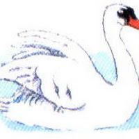 Aves (34).jpg
