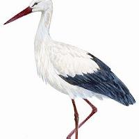 Aves (15).jpg