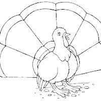 Aves (90).jpg