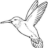 Aves (13).jpg