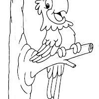 Aves (63).jpg