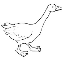 Aves (72).jpg