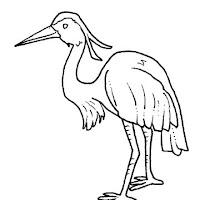 Aves (6).jpg