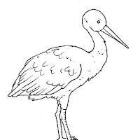 Aves (16).jpg