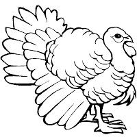 Aves (12).jpg