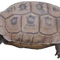 Reptiles (31).jpg