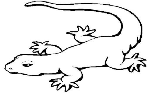 Dibujos para colorear anfibios y reptiles - Imagui
