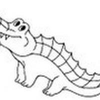 Reptiles (19).jpg