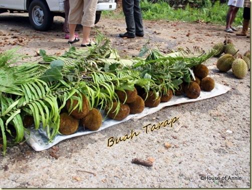 buah tarap