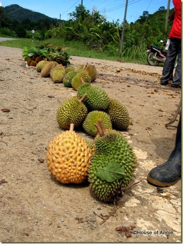 roadside durians
