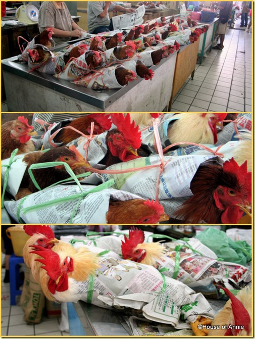 Sibu Central Market Live Chickens