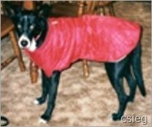 Shadow red coat