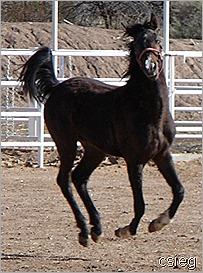 Kchocholate Feb 21 2011 08118