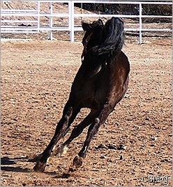 Kchocholate Feb 21 2011 08121