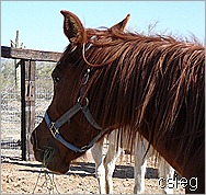 m feb 21  (10) ALI's Horses and Property 104