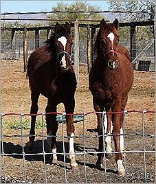 feb 21  (10) ALI's Horses and Property 056