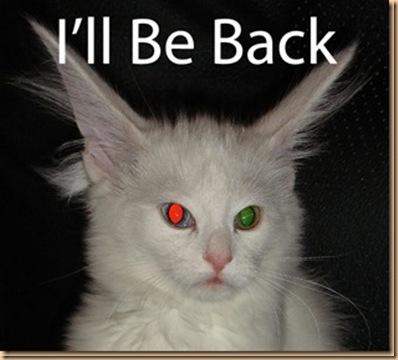 IllBeBack_Cat_thumb[1]