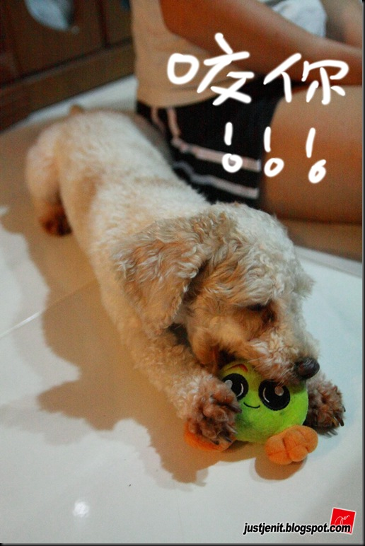 _ Doggie_2009.08.05_0045