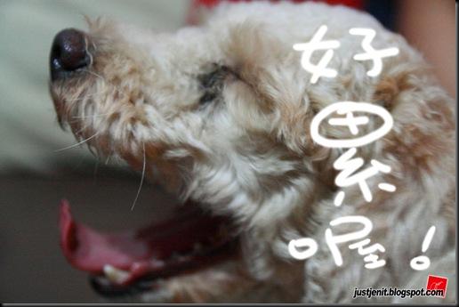 _ Doggie_2009.08.05_0010