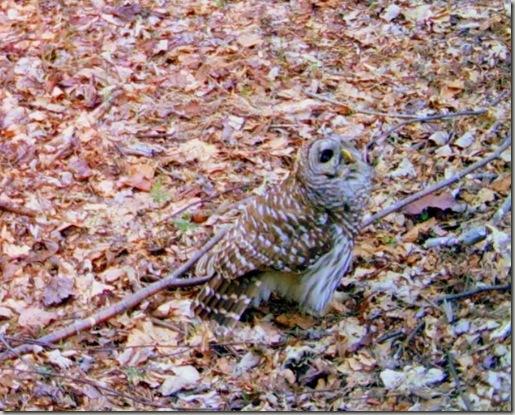 owlup