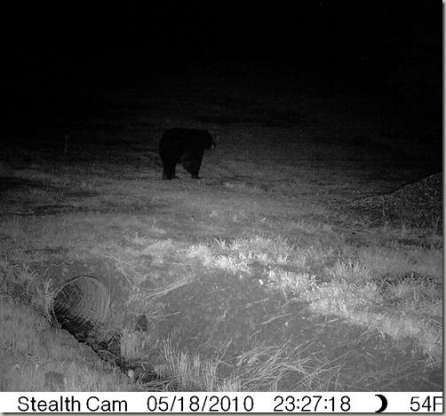 bear51810