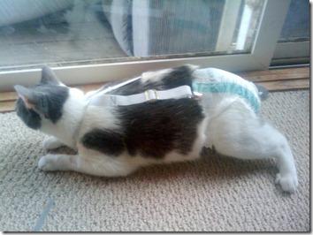 catdiaper