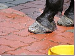 horse shoe 4