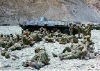 Afganistan 1979-1989, Kompania strzelców zmotoryzowanych na BTR Afganistan 1984-1985