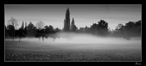 Brume du soir dans le parc de Versailles
