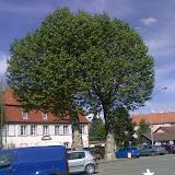Ein Baum mit zwei Stämmen?