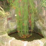 Der Brunnen der Verliebten