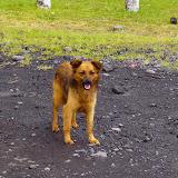Ein streunender Hund
