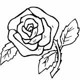 Flores30.jpg