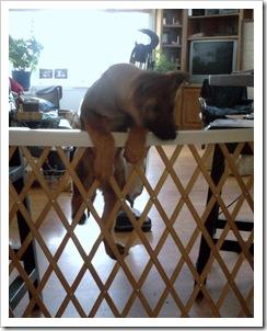 2010-01-23 baby gate2