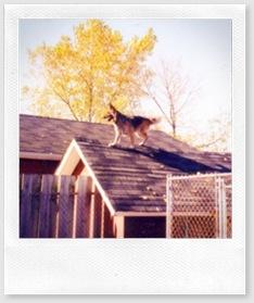 Josephine - roof11