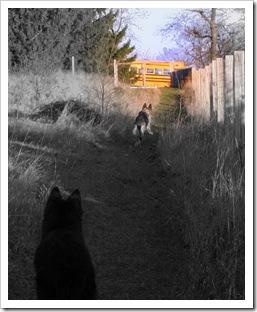 2009.11.17 Dogs in Yard-39