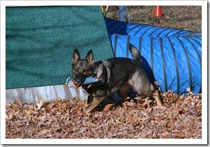 2009.11.17 Dogs in Yard