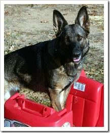 2009.11.17 Dogs in Yard-11